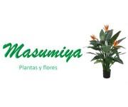 MASUMIYArecorte